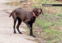 Giv din hund et hundetegn